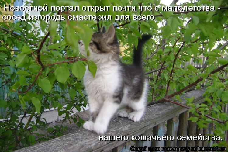 Котоматрица: Новостной портал открыт почти что с малолетства - сосед изгородь смастерил для всего  нашего кошачьего семейства.