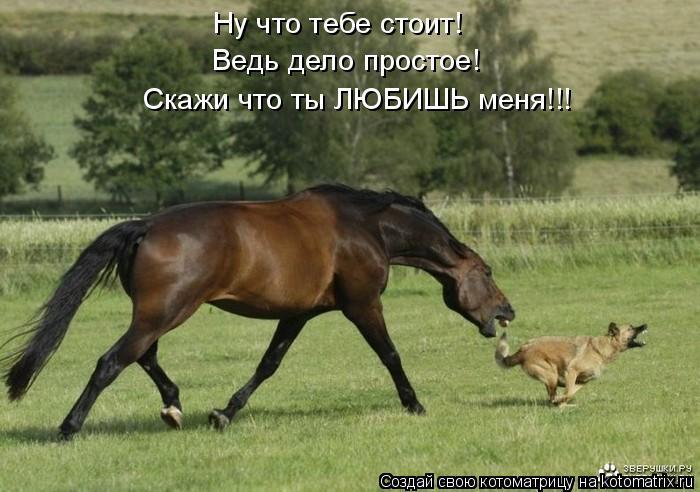 Котоматрица: Ну что тебе стоит! Ведь дело простое! Скажи что ты ЛЮБИШЬ меня!!!