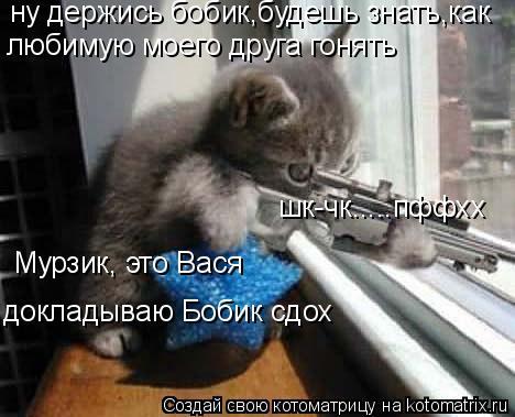 Котоматрица: ну держись бобик,будешь знать,как любимую моего друга гонять шк-чк.....пффхх Мурзик, это Вася докладываю Бобик сдох
