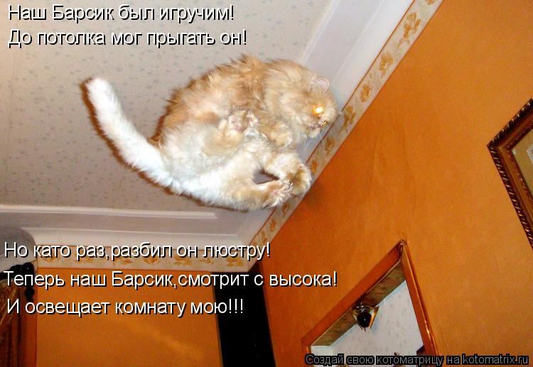 Котоматрица: До потолка мог прыгать он! Но като раз,разбил он люстру! Теперь наш Барсик,смотрит с высока! И освещает комнату мою!!! Наш Барсик был игручим!