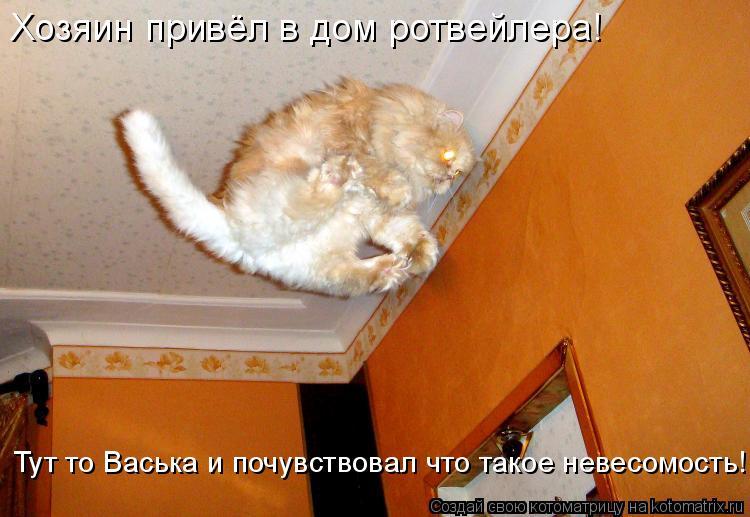 Котоматрица: Хозяин привёл в дом ротвейлера! Тут то Васька и почувствовал что такое невесомость!