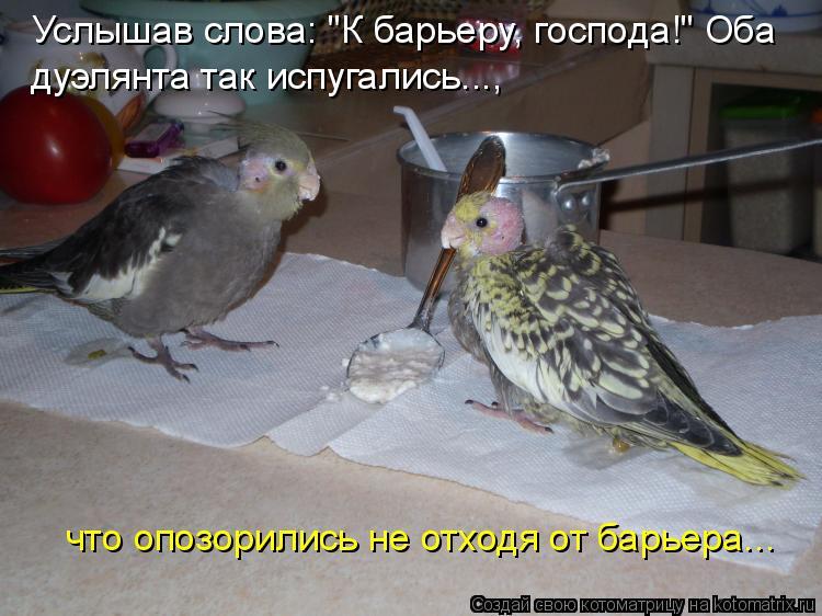 """Котоматрица: Услышав слова: """"К барьеру, господа!"""" Оба  дуэлянта так испугались..., что опозорились не отходя от барьера..."""
