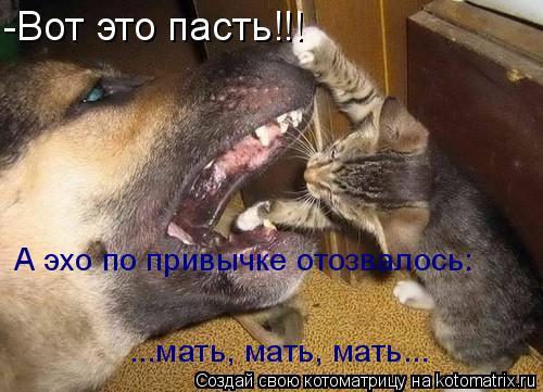 Котоматрица: -Вот это пасть!!! А эхо по привычке отозвалось:  ...мать, мать, мать...