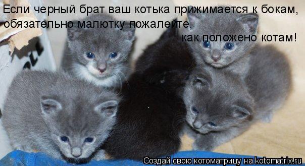 Котоматрица: Если черный брат ваш котька прижимается к бокам, обязательно малютку пожалейте,  как положено котам!