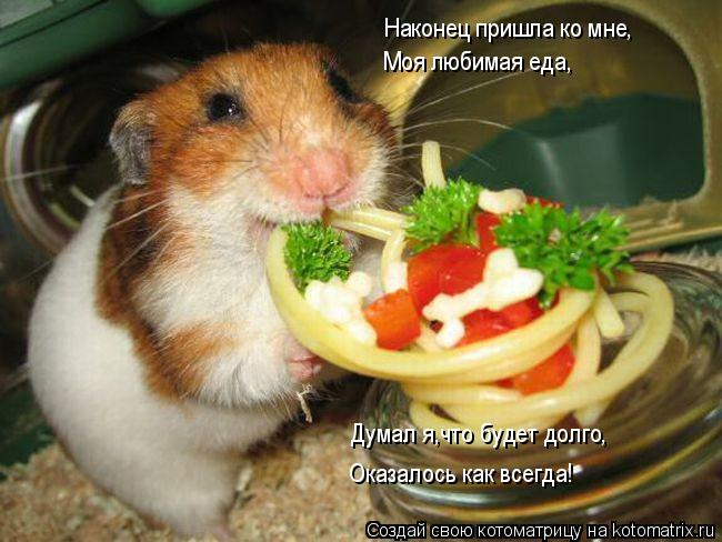 Котоматрица: Наконец пришла ко мне, Моя любимая еда, Думал я,что будет долго, Оказалось как всегда!