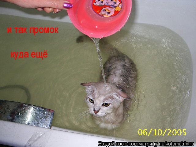 Котоматрица: и так промок  куда ещё
