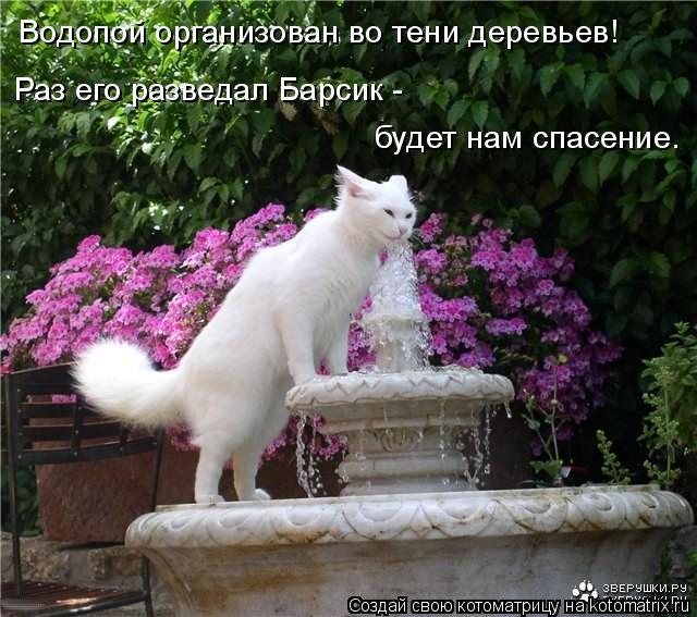Котоматрица: Водопой организован во тени деревьев! Раз его разведал Барсик -  будет нам спасение.