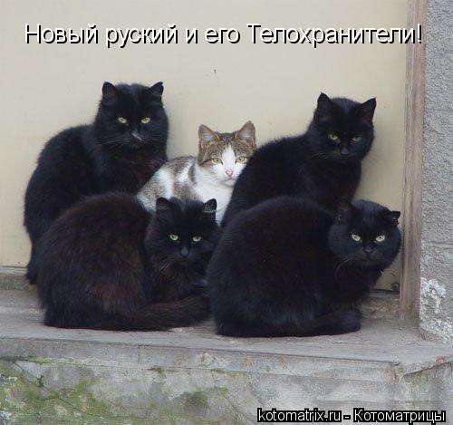 Котоматрица: Новый руский и его Телохранители!