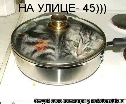 Котоматрица: НА УЛИЦЕ- 45)))