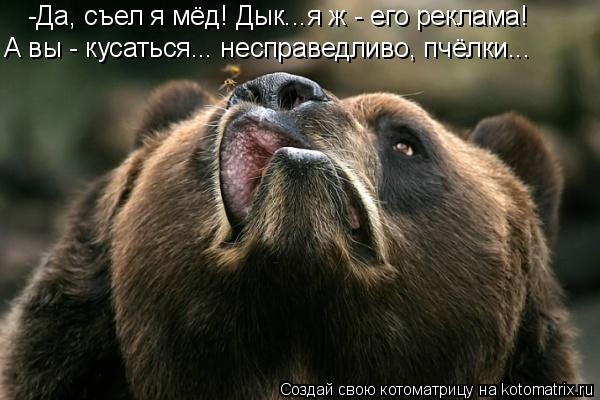 Котоматрица: -Да, съел я мёд! Дык...я ж - его реклама! А вы - кусаться... несправедливо, пчёлки...