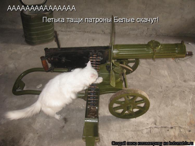 Котоматрица: ААААААААААААААА Петька тащи патроны Белые скачут!