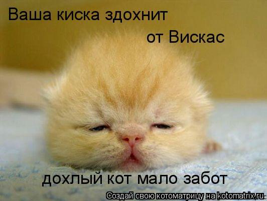 Котоматрица: Ваша киска здохнит  от Вискас дохлый кот мало забот