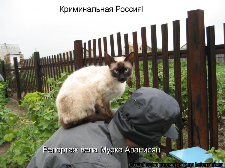 Котоматрица: Криминальная Россия! Репортаж вела Мурка Аванисян