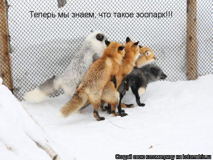 Котоматрица: Теперь мы знаем, что такое зоопарк!!!