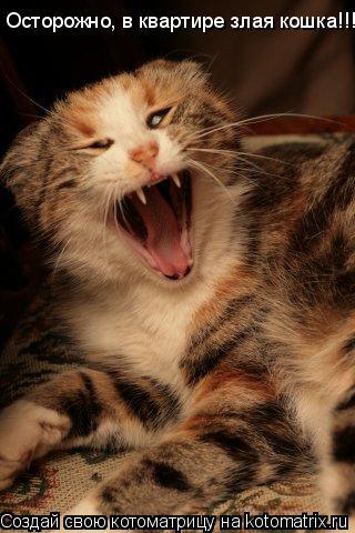 Котоматрица: Осторожно, в квартире злая кошка!!!!