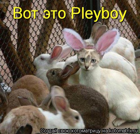 Котоматрица: Вот это Pleyboy