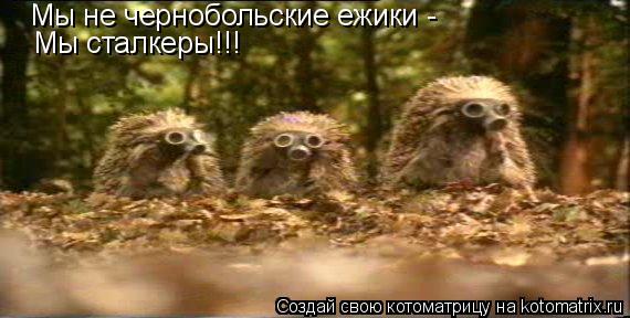 Котоматрица: Мы не чернобольские ежики -  Мы сталкеры!!!