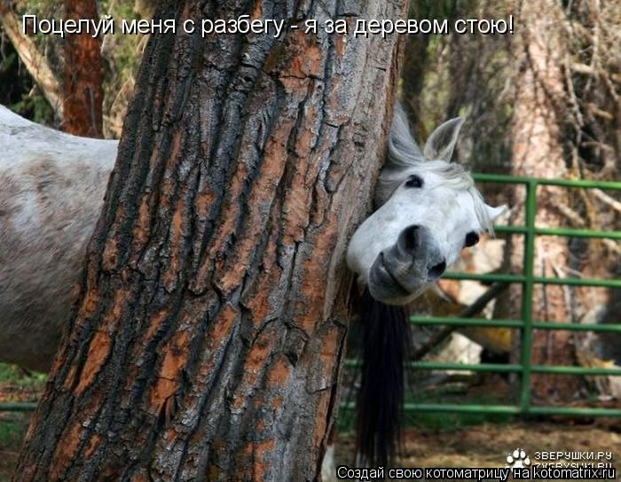 Котоматрица: Поцелуй меня с разбегу - я за деревом стою!
