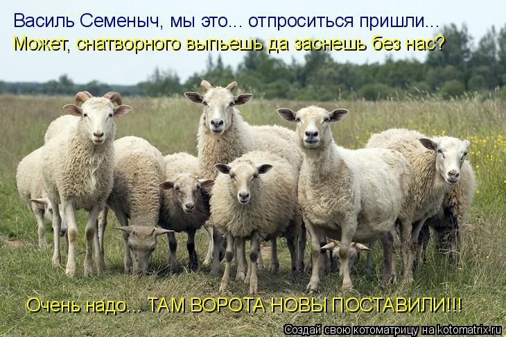 Котоматрица: Василь Семеныч, мы это... отпроситься пришли... Может, снатворного выпьешь да заснешь без нас? Очень надо... ТАМ ВОРОТА НОВЫ ПОСТАВИЛИ!!!