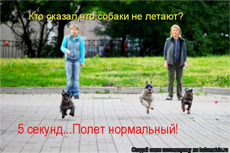 Котоматрица: 5 секунд...Полет нормальный! Кто сказал,что собаки не летают?