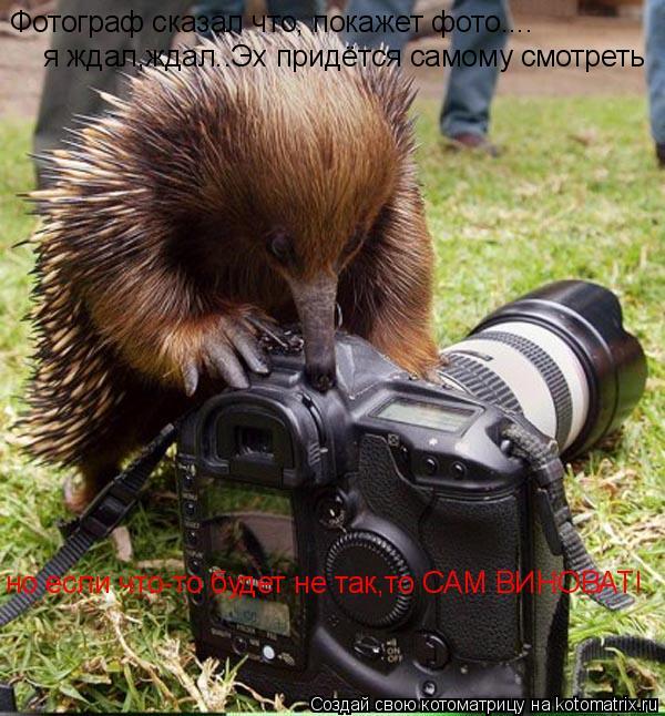 Котоматрица: Фотограф сказал что, покажет фото.... я ждал,ждал..Эх придётся самому смотреть но если что-то будет не так,то САМ ВИНОВАТ!