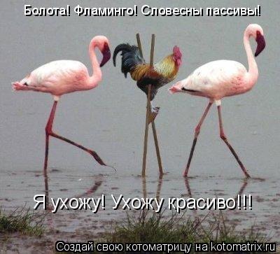 Котоматрица: Болота! Фламинго! Словесны пассивы! Я ухожу! Ухожу красиво!!!