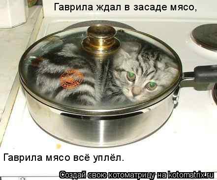 Котоматрица: Гаврила ждал в засаде мясо, Гаврила мясо всё уплёл.