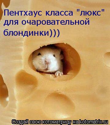 """Котоматрица: Пентхаус класса """"люкс"""" для очаровательной  блондинки)))"""