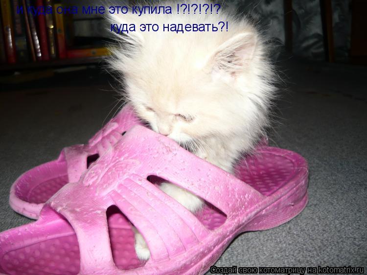 Котоматрица: и куда она мне это купила !?!?!?!? куда это надевать?!