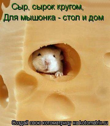 Котоматрица: Сыр, сырок кругом, Для мышонка - стол и дом