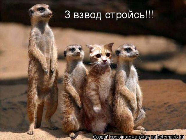 Котоматрица: 3 взвод стройсь!!!
