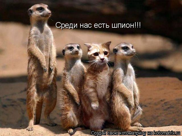 Котоматрица: Среди нас есть шпион!!!