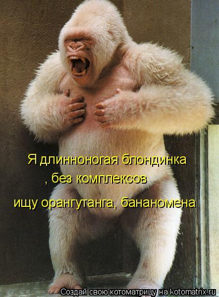 Котоматрица: Я длинноногая блондинка , без комплексов ищу орангутанга, бананомена