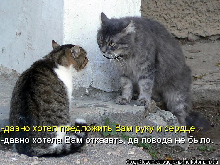 Котоматрица: -давно хотела Вам отказать, да повода не было… -давно хотел предложить Вам руку и сердце