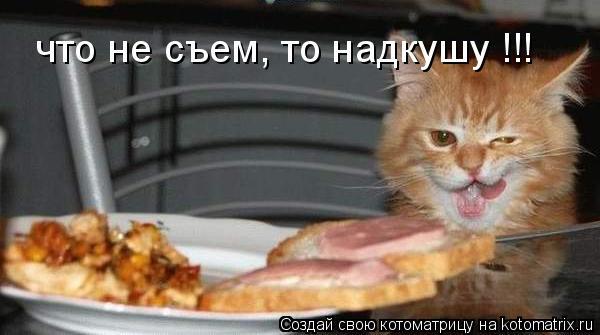 Котоматрица: что не съем, то надкушу !!!