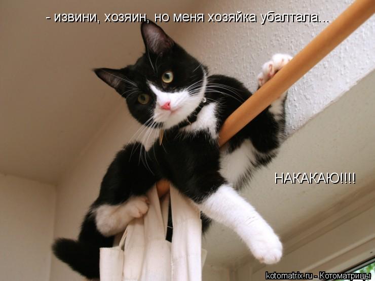 Котоматрица: - извини, хозяин, но меня хозяйка убалтала... НАКАКАЮ!!!!