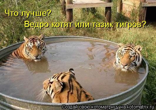 Котоматрица: Что лучше? Ведро котят или тазик тигров?
