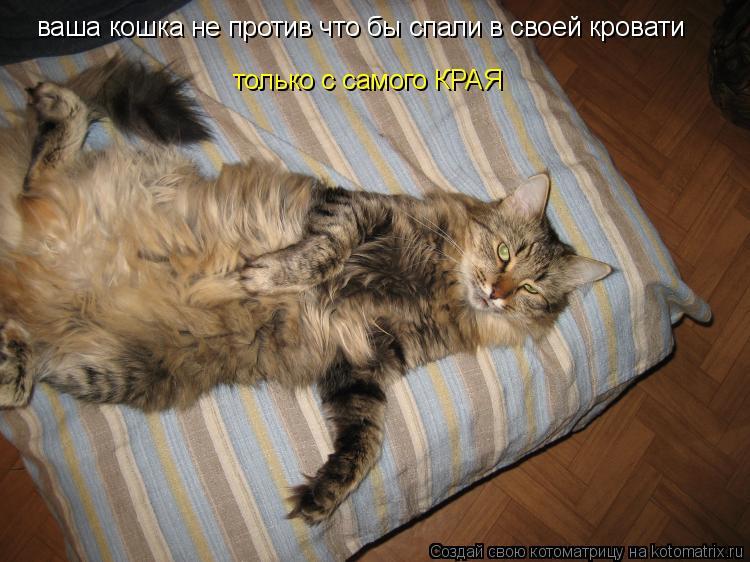 Котоматрица: ваша кошка не против что бы спали в своей кровати только с самого КРАЯ