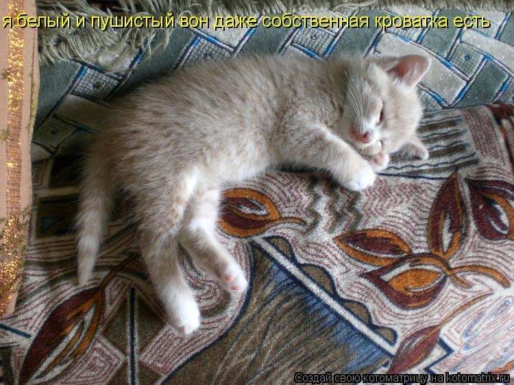 Котоматрица: я белый и пушистый вон даже собственная кроватка есть
