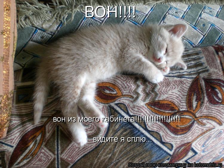 Котоматрица: ВОН!!!! вон из моего кабинета!!!!!!!!!!!!!!!!!!! видите я сплю...