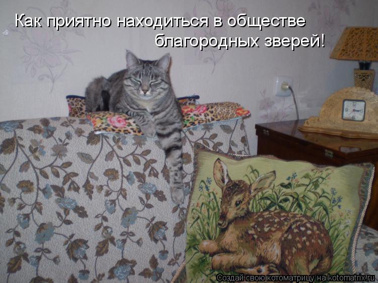 Котоматрица: Как приятно находиться в обществе благородных зверей!