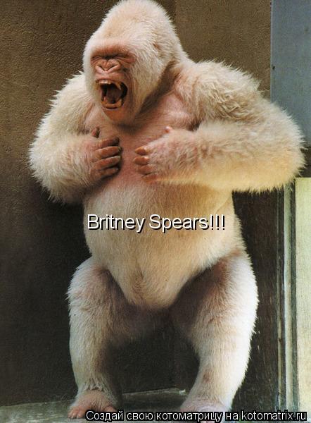 Котоматрица: Britney Spears!!!