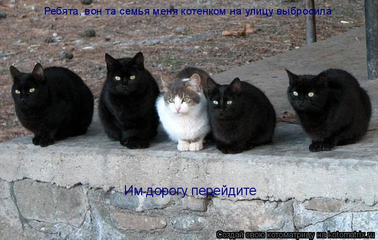 Котоматрица: Ребята, вон та семья меня котенком на улицу выбросила Им дорогу перейдите