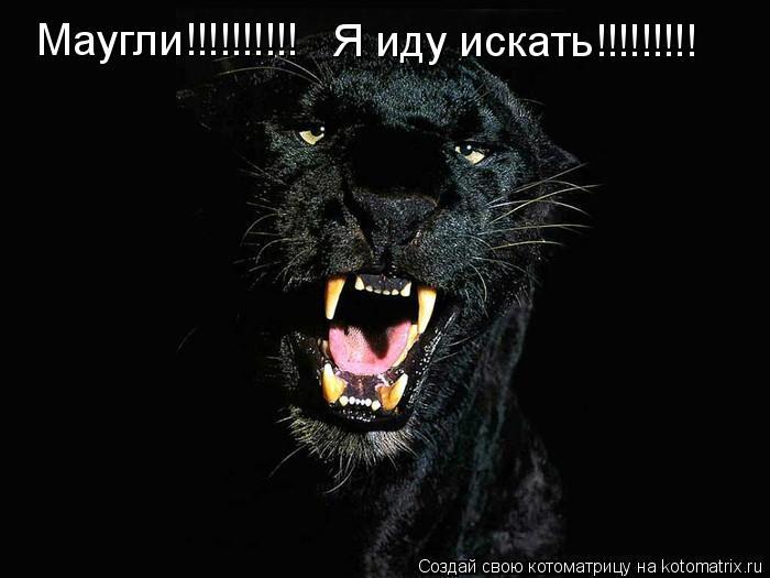 Котоматрица: Маугли!!!!!!!!!! Я иду искать!!!!!!!!!