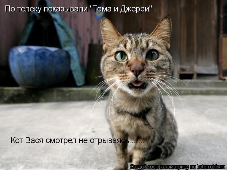 """Котоматрица: По телеку показывали """"Тома и Джерри"""" Кот Вася смотрел не отрываясь........."""