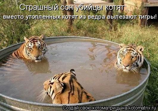 Котоматрица: Страшный сон убийцы котят: вместо утопленных котят из ведра вылезают тигры!