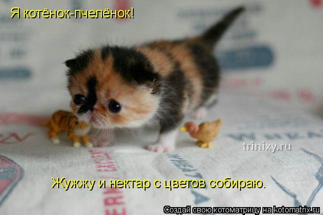 Котоматрица: Я котёнок-пчелёнок! Жужжу и нектар с цветов собираю.