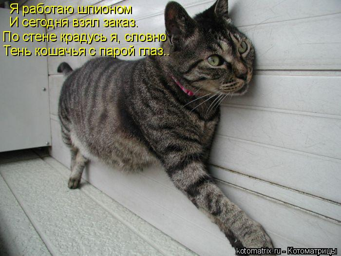 Котоматрица: Я работаю шпионом И сегодня взял заказ. По стене крадусь я, словно Тень кошачья с парой глаз..