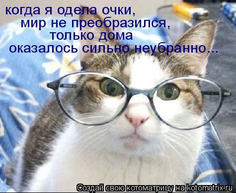 Котоматрица: когда я одела очки,  мир не преобразился, только дома  оказалось сильно неубранно...