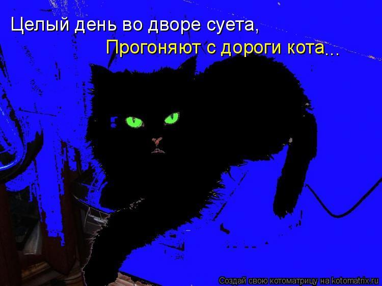Котоматрица: Целый день во дворе суета, Прогоняют с дороги кота ...